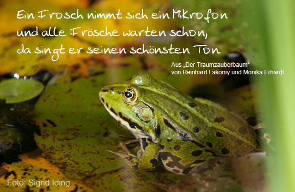 Frosch-Rockn-Roll