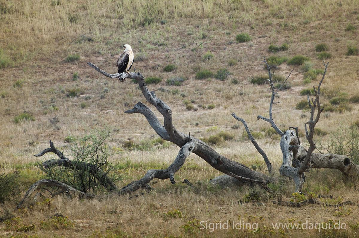 Kalahari_07