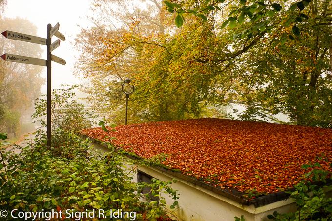 Ein Bett aus rotbraunen Blättern