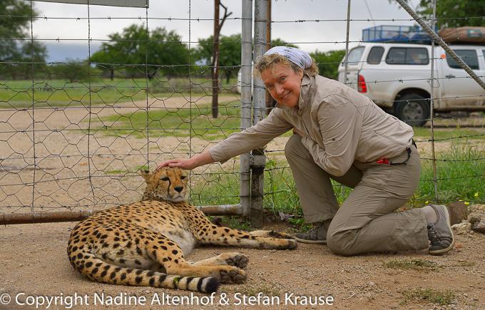 Gepardenfreundschaft
