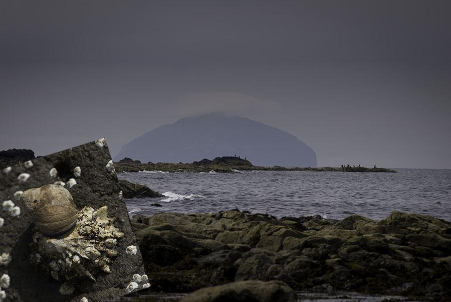 Am Strand von Culzean Castle hat man einen magischen Blick nach Ailsa Craig und findet wunderschöne alte Schnecken
