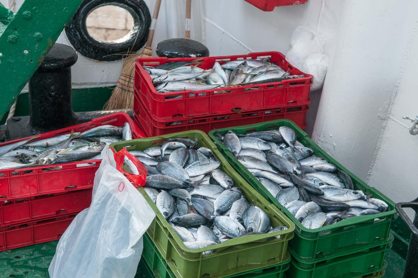 Kisten mit frischem Fisch