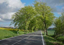 Alleenstraße nach Garz Rügen