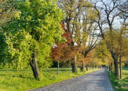 Kopfsteinpflaster-Allee auf Rügen