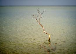 Ein Baumrest stehend im Wasser am Weststrand Darß