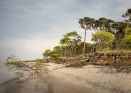 Entwurzelte Bäume am Weststrand Darß