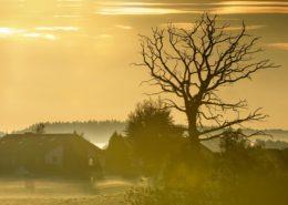 Abgestorbener Baum bei Ebersberg an einem schönen goldenen Herbstmorgen