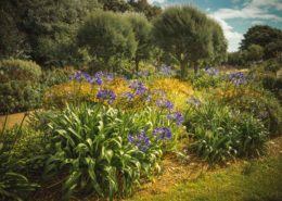 Lila Blüten im Park