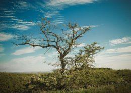 Baum im Grenzland Hadrianswall