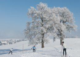 Langläuferinnen in Hundham an einem sonnigen Tag