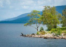 Baumgruppe auf einer Landzunge im Loch Rannoch Schottland