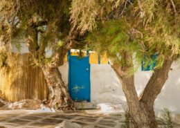 Ein altes Strandhaus mit Pinienbäumen in Agia Anna Naxos