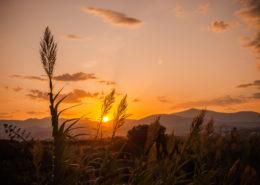 Schilf im Sonnenaufgang Naxos