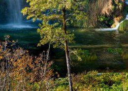 Plitvice National Park Wasserfall und Baum
