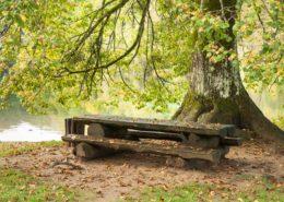 Plitvice National Park Bank unter einem Baum