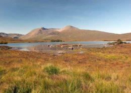 Sunny Day in the Rannoch Moor Scotland