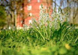 Frühling. Blumen im Park von Schloss Spyker Rügen