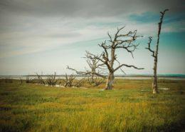 abgestorbene Bäume am Strand bei Flut