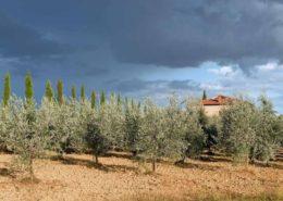 Olivenhain mit Haus in der Toskana. Gewitterwolken