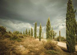 Zypressenallee im Val d'Orcia - Toskana