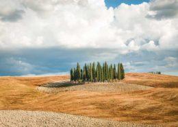 Zypressengruppe im Val d'Orcia - Toskana