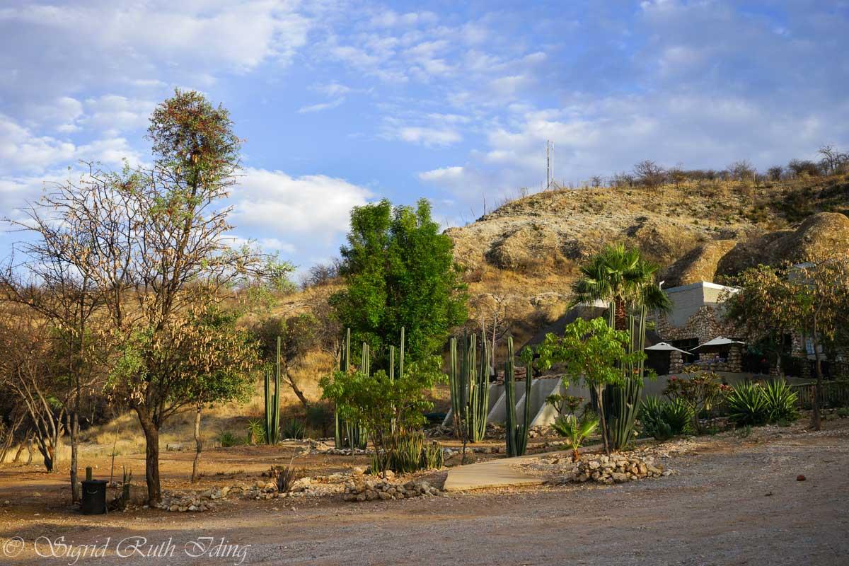 Garten im Sasa Safari Camp